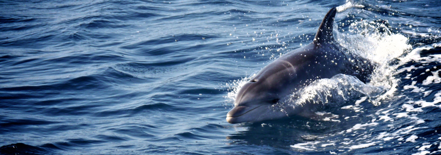How To Bring Good Luck day 3: camper hoping dolphins will bring good luck